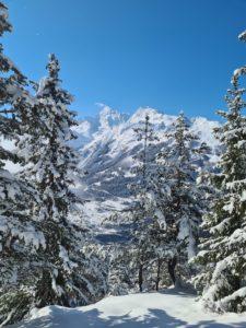 Le Mont Pourri vu depuis la forêt du Mousselard